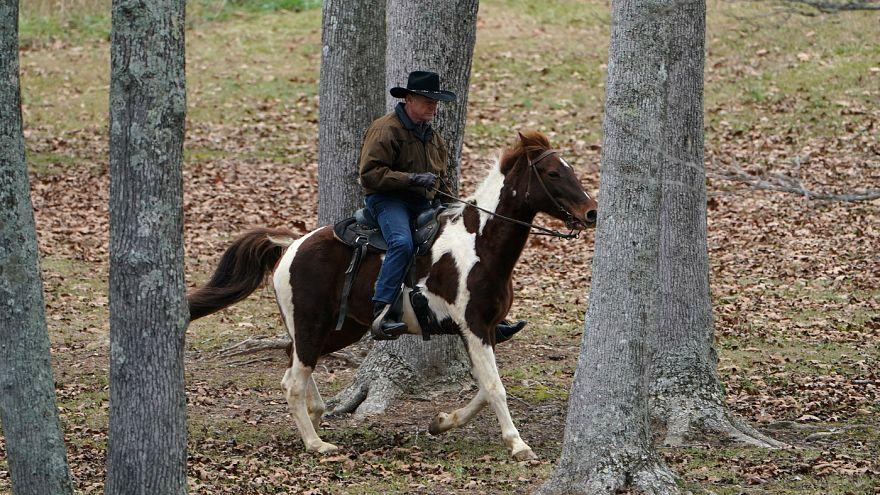 تجاوز به اسب و حجاب اجباری برای اسب یا انسان ؟