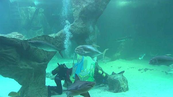 Presépio para tubarões