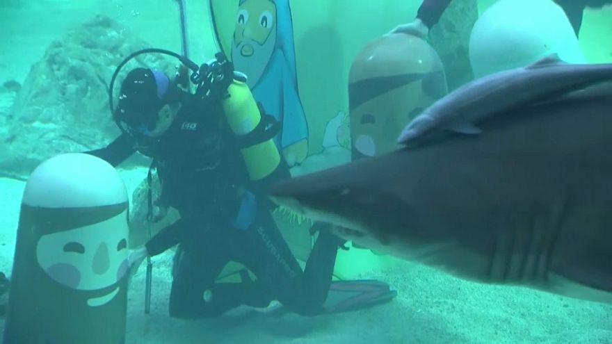 Рождество с акулами