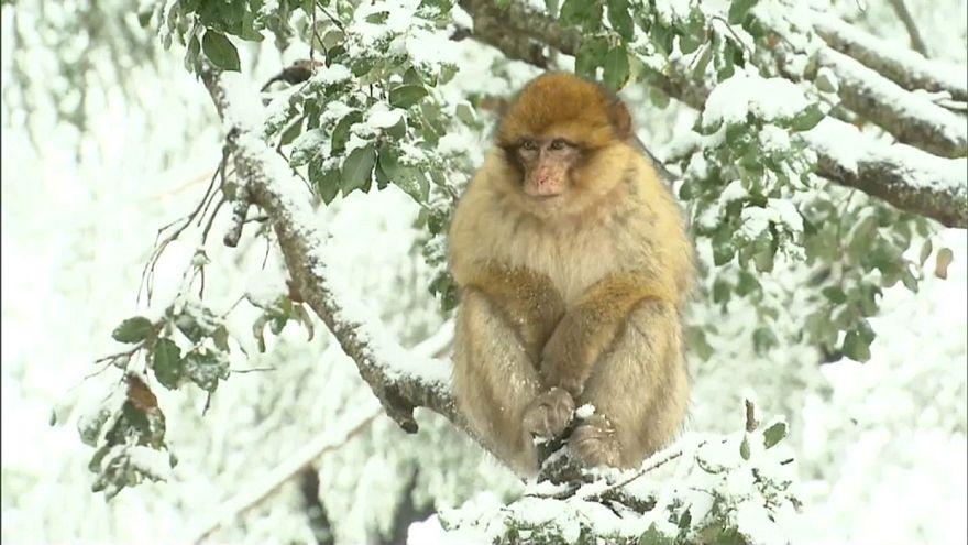 شاهد: تساقط الثلوج الكثيفة في جبال الأطلس المغربية