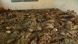 تقرير رواندا الجديد: فرنسا متواطئة في الإبادة الجماعية لعام 1994