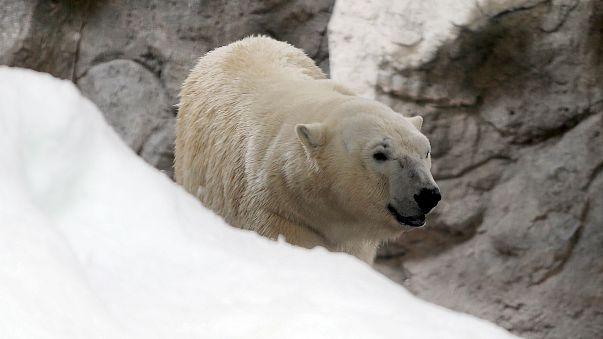 لماذا لم يقدم المصورون الطعام لدب كان يموت جوعا؟