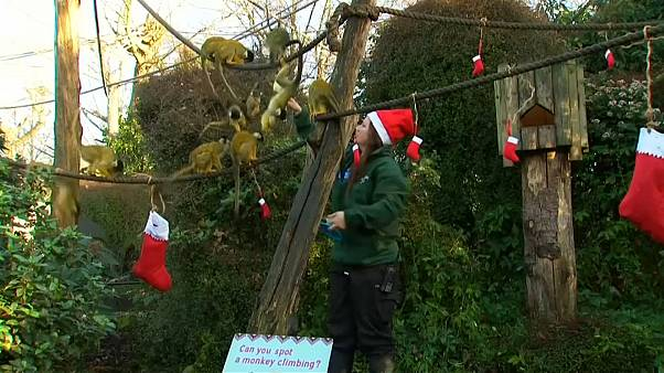 Christmas as London Zoo