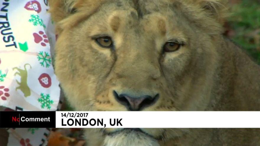 London: Weihnachten im Zoo