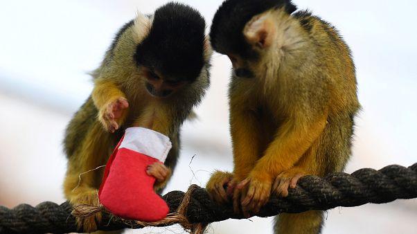 Karácsony a londoni állatkertben