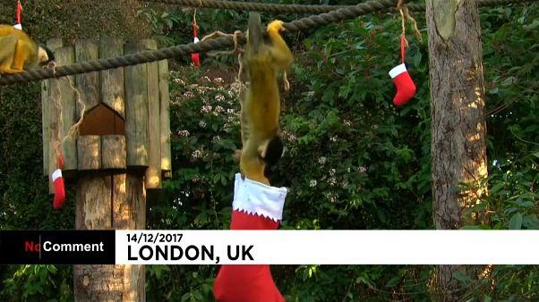 C'est déjà Noël au zoo de Londres