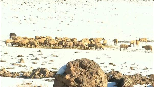 تساقط كثيف للثلوج في عدة مناطق بالمغرب