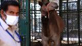 Dubai opens $10 million camel hospital
