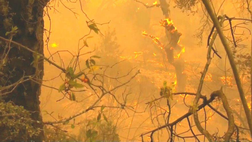 Kalifornien: Nur 40 Prozent der Feuer unter Kontrolle