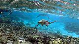 Ένα μαγευτικό βίντεο για την προστασία του Μεγάλου Κοραλλιογενή Ύφαλου