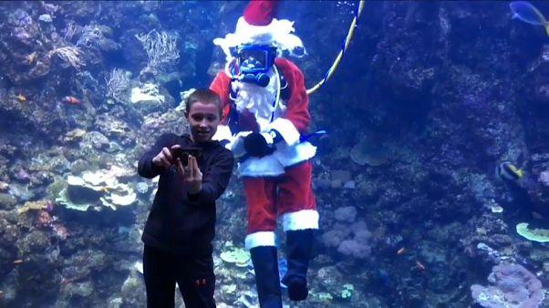 Санта-Клаус и другие подводные обитатели