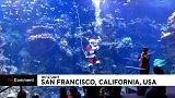 San Francisco: Hier geht der Weihnachtsmann baden