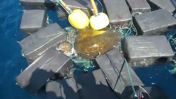 Tartaruga presa a fardos de cocaína