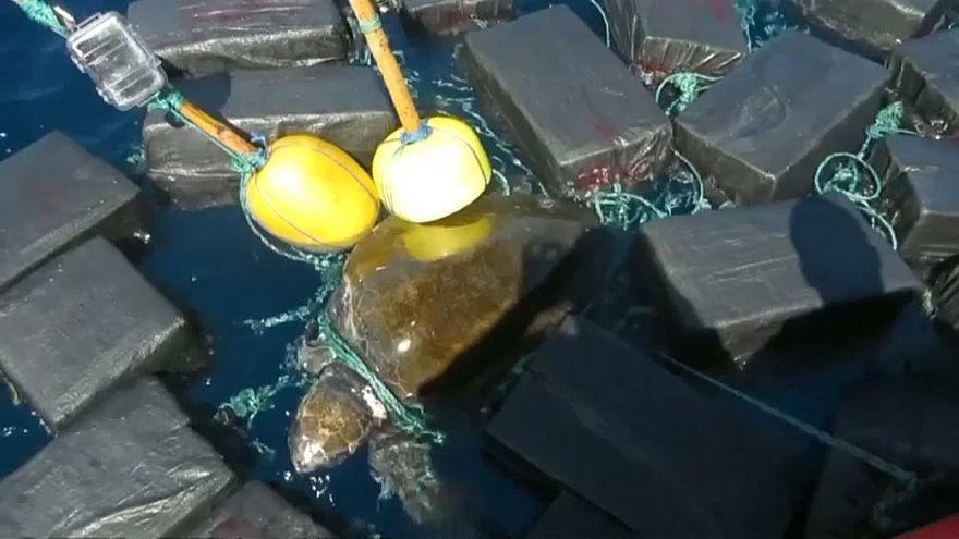 Черепаха в кокаиновых сетях