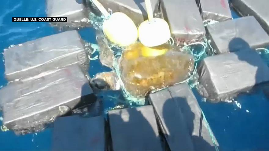 Schildkröte im Drogennetz