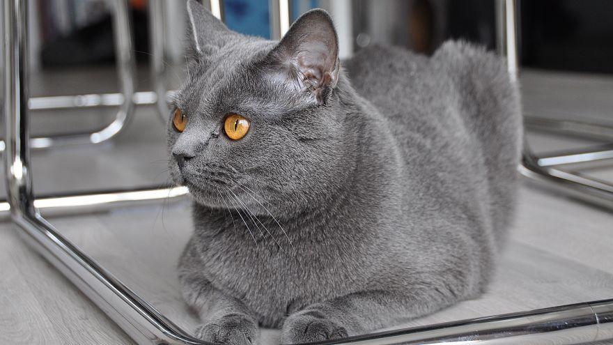 وزارات فرنسية توظف القطط