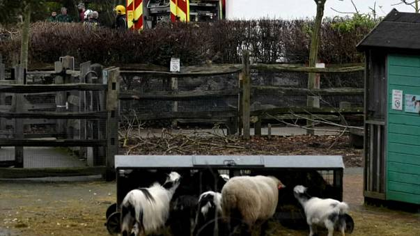 Le zoo de Londres fermé après un incendie
