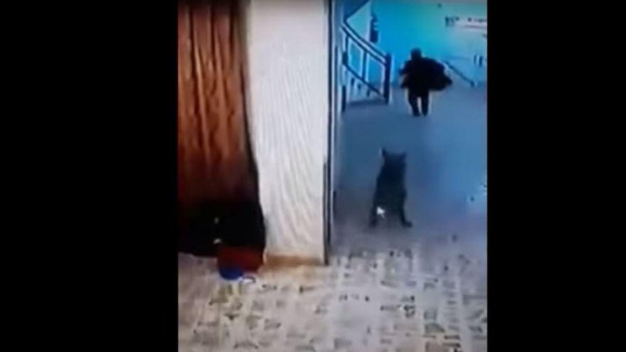 بالفيديو: ضبع يقتحم مستشفى للأطفال في العراق