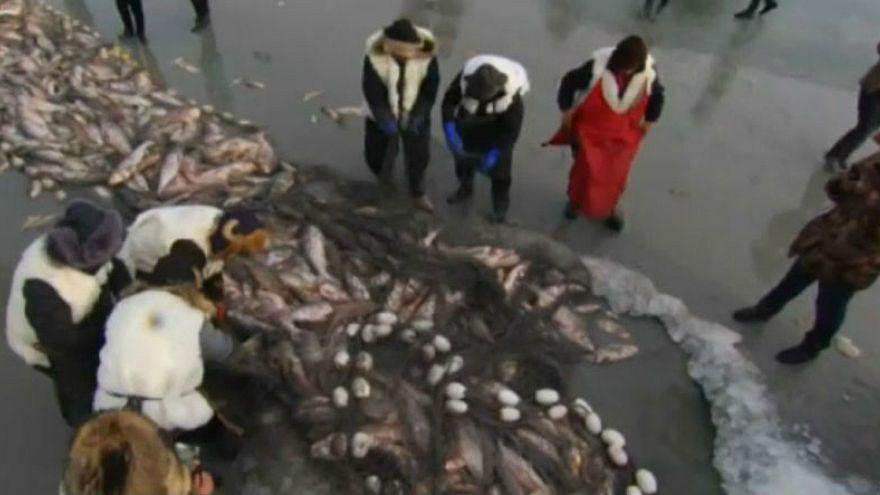 Çinli balıkçılar buz tutan göl üzerinde av sezonunu açıyor