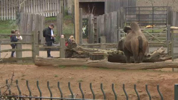 Kinyitott a Londoni Állatkert