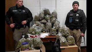 زوج سالخورده به پلیس: ۲۷ کیلو ماریجوآنا هدیه کریسمس است
