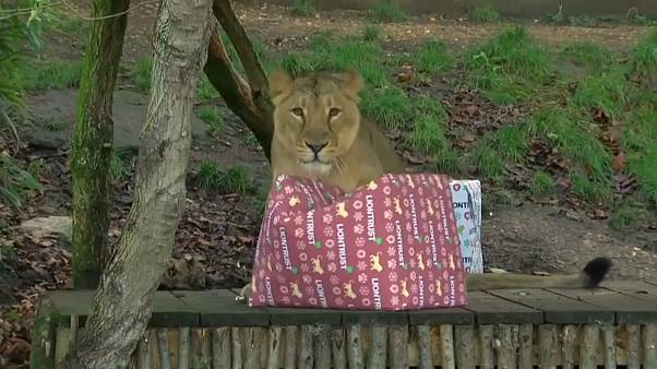 Nach Brand: Bescherung bei den Zootieren