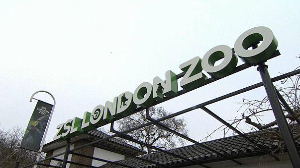 Londra: riapre lo zoo dopo l'incendio