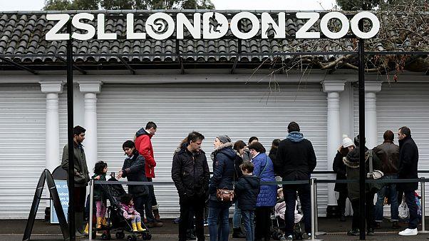 Άνοιξε ξανά ο ζωολογικός κήπος του Λονδίνου