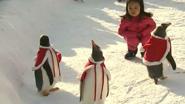 چین؛ پنگوئنها در لباس بابانوئل