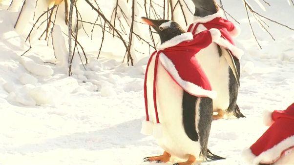 Buone feste da questi pinguini vestiti da Babbo Natale