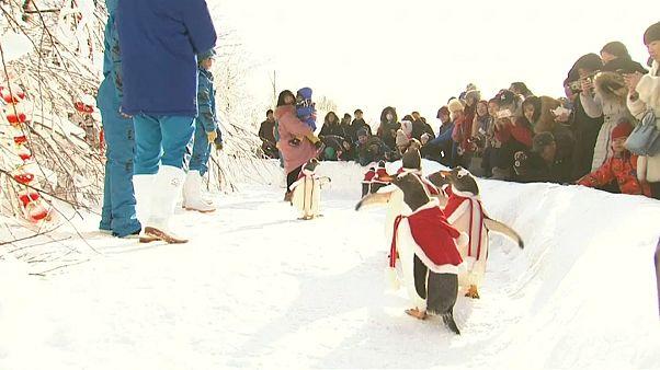 Çin'in Noel pelerinli penguenleri
