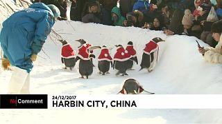 Пингвины радуют китайских детей