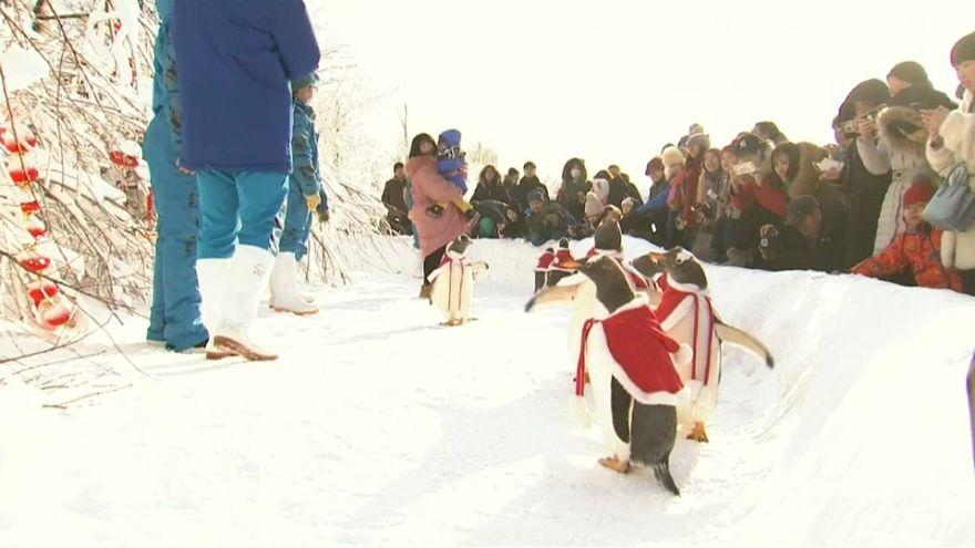Los pingüinos colaboran en la gira mundial de Papá Noel