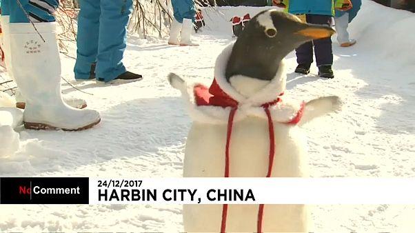 Pinguine verkleidet als Weihnachtsmann