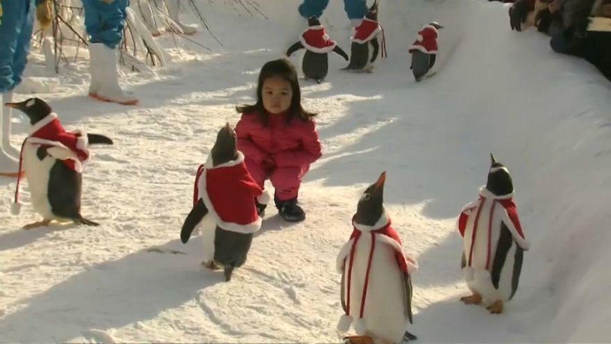 Sevimli penguenler Çinli turistlerin ilgi odağı oldu
