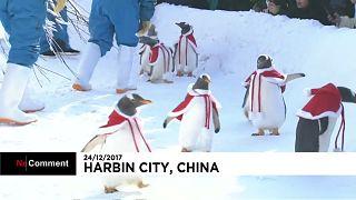 O desfile de pinguins natalícios na China