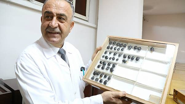 Türk profesör literatüre kazandırdığı böceğe babasının ismini verdi