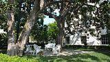 البيت الأبيض يودع أقدم شجرة في حديقته بعد أوامر ميلانيا بإزالتها