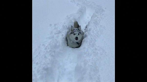 USA: rekord hideg, rekord hó