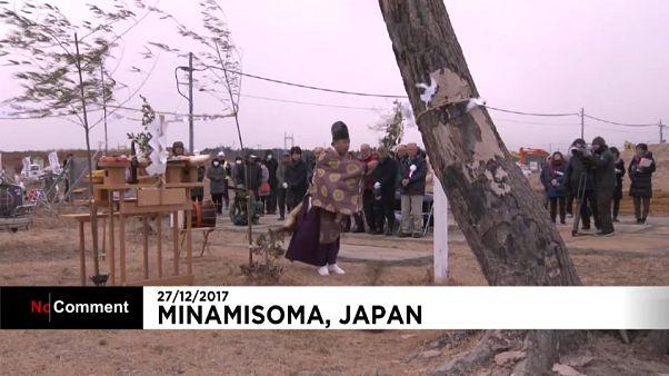 """Japón tala su """"árbol milagro"""""""
