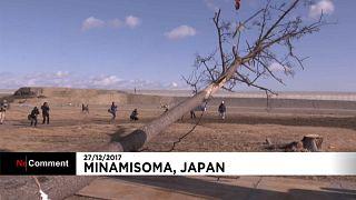Pinheiro milagroso abatido no Japão