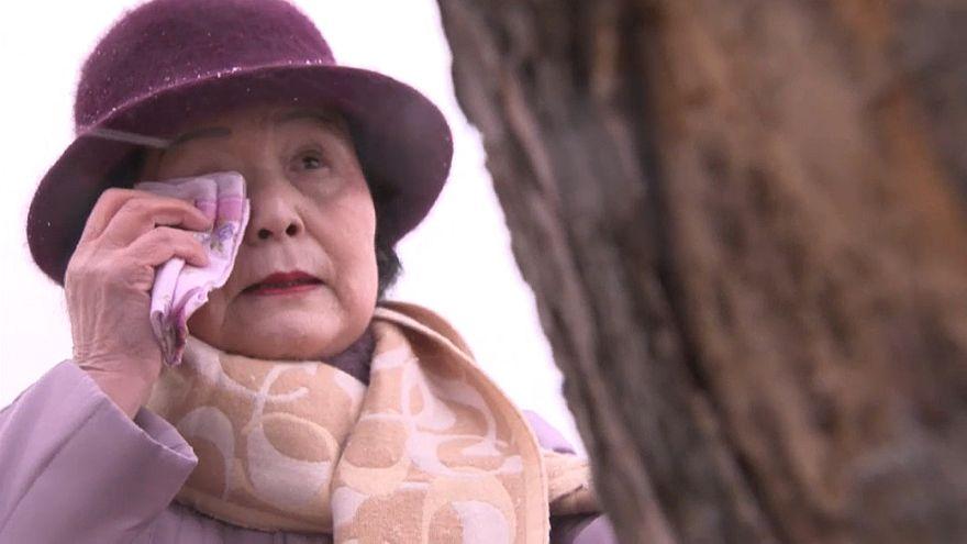 Unter Tränen: Wunderbaum in Japan wird gefällt