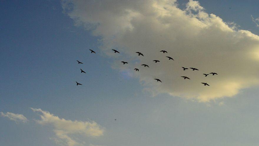 """مشهد مخيف لطيور """"الزرزور"""" تغزو سماء الجزائر العاصمة"""