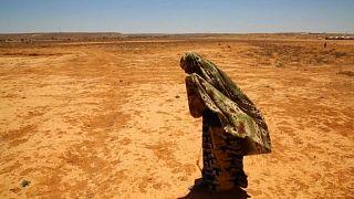 I numeri della fame tornano a crescere: 815 milioni di persone a rischio