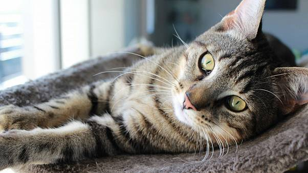 گربهای که بعد از ده سال به خانه بازگشت