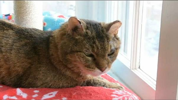 عائلة تعثر على قطها المفقود بعد 10 سنوات