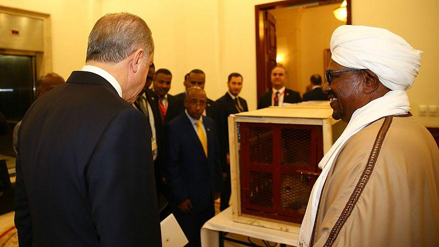 Erdoğan'a hediye edilen aslan yavruları Türkiye'ye getirildi