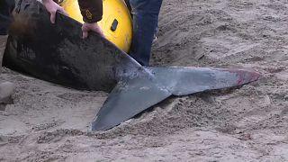 Подари киту жизнь
