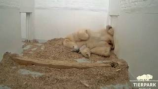 Polar bear mother Tonja with her new female cub at Berlin's Tierpark zoo.
