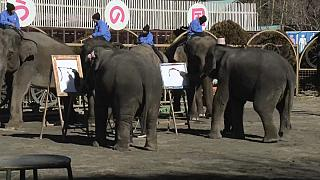 Elephants show off their calligraphy skills at a zoo near Tokyo